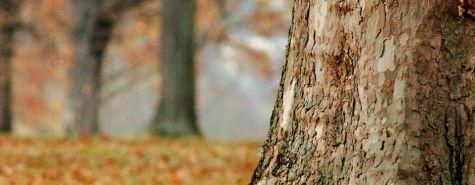 Baum_Rosensteinpark_U.Stuebler